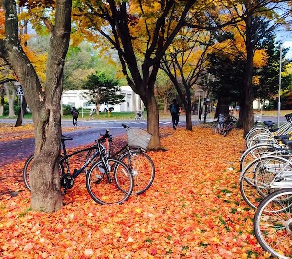 しらべぇ1031北海道大学3