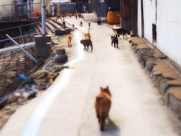 青島の路地とネコ