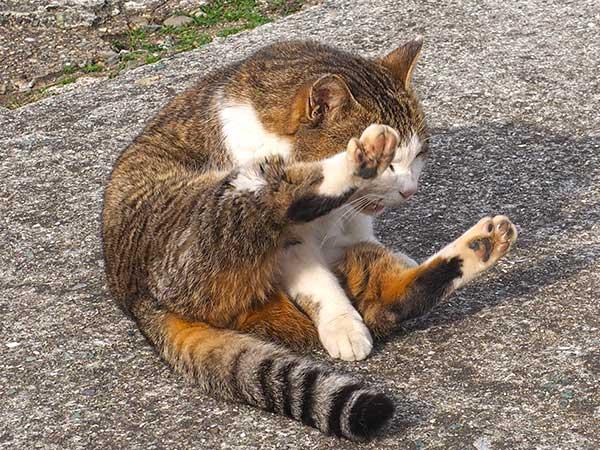 甘える青島のネコ