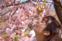 花見イメージ