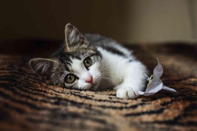 「貧乏人はペット飼うな」子猫を拾った女性に義母が激怒 その理由に納得の声